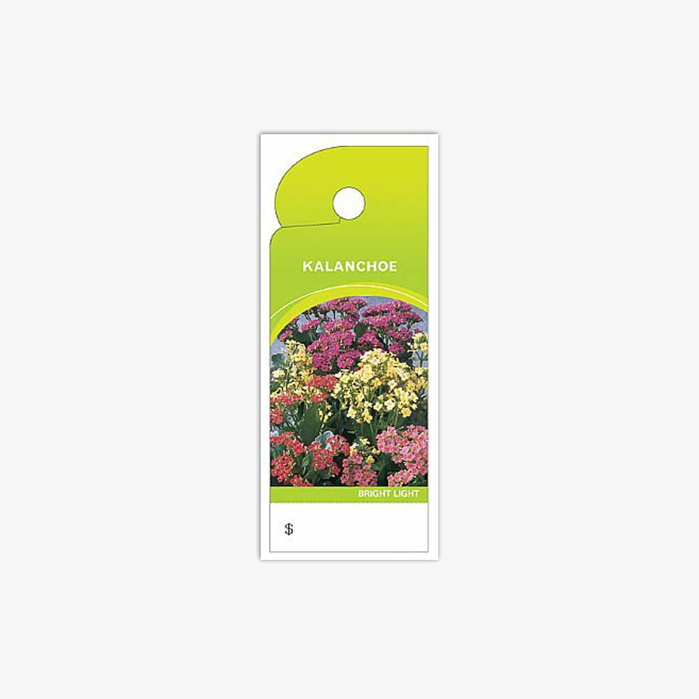 CARE TAGS, KALANCHOE