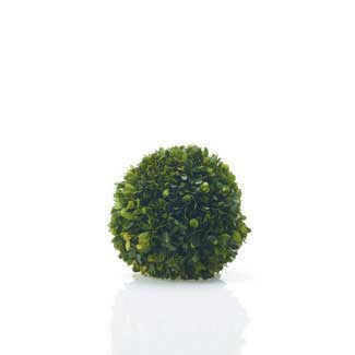"BOXWOOD SPHERE 6"" PRESERVED"
