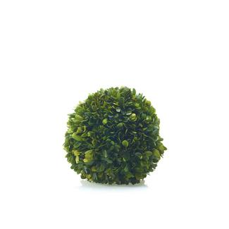 "BOXWOOD SPHERE 8"" PRESERVED"