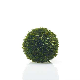 "BOXWOOD SPHERE 10"" PRESERVED"