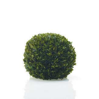 "BOXWOOD SPHERE 12"" PRESERVED"