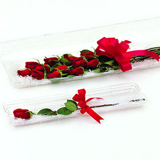 "25"" CLEAR SINGLE ROSE BOX"