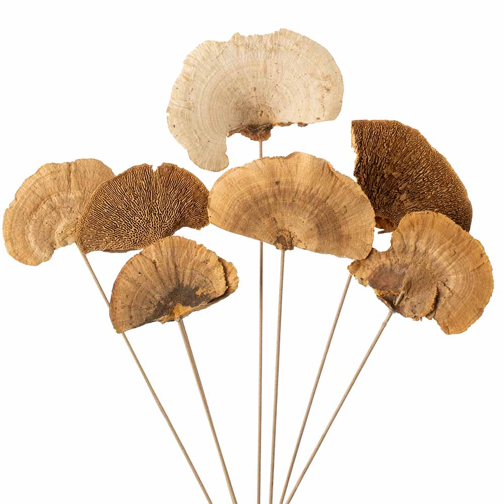 STEMMED MUSHROOMS