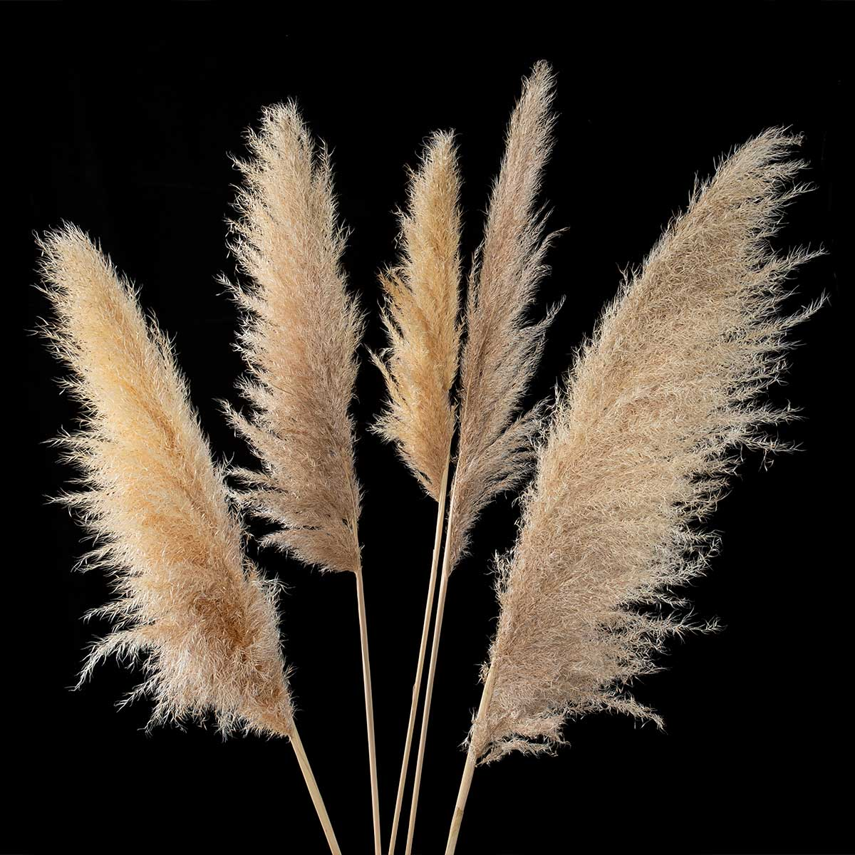3.5'-4' DRIED PAMPAS GRASS