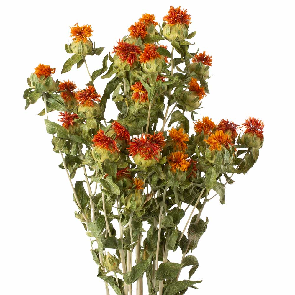 DRIED ORANGE SAFFLOWER