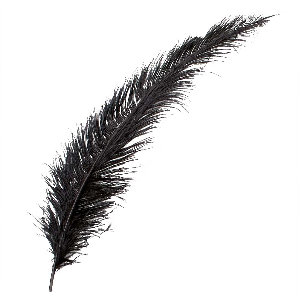 "18-22"" OSTRICH FEATHERS,BLACK"