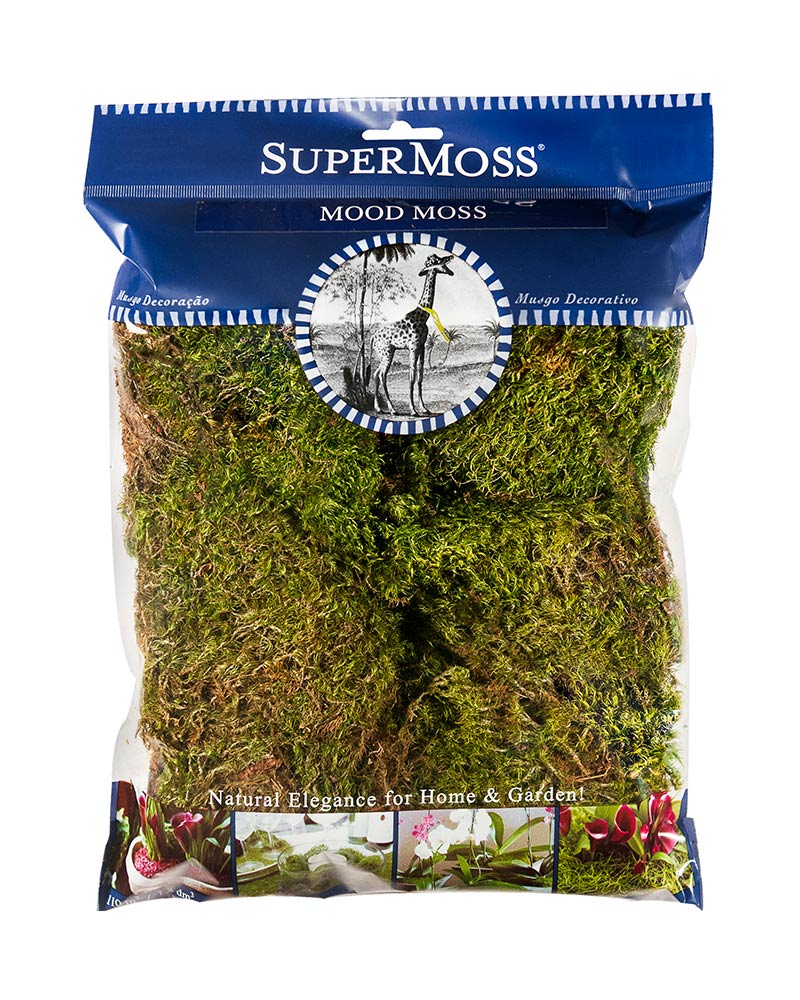 Dried/Preserved Mosses