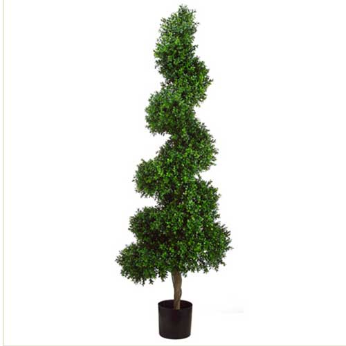 5.5' Spiral Boxwood Topiary in        Plastic Pot