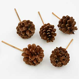 "2.5""-3.5"" PICKED PINE CONES"